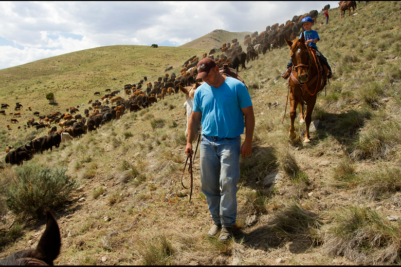 Tom Lewis, of Lehi, leads his horse down the slope with his nephew Will Lewis, 5,  during one of the family's cattle drives through Tickville, north of Saratoga Springs in Utah, on May 13, 2013.